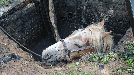 Рівненські бійці ДСНС врятували від неминучої загибелі свійську тварину
