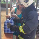Рівненські вогнеборці допомогли мешканцям та волонтерам зняти з дерева котеня
