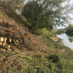 У Гощі понад берегом річки невідомі зрізали дерева