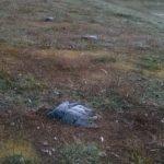 Мертві голуби на вулицях Рівного є джерелом інфекції