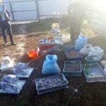На Рівненщині ліквідовано діяльність підпільного цеху з обробки бурштину та вилучено близько 100 кг дорогоцінного каміння