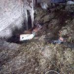 Рівненські бійці ДСНС врятували від загибелі свійську тварину (ФОТО)