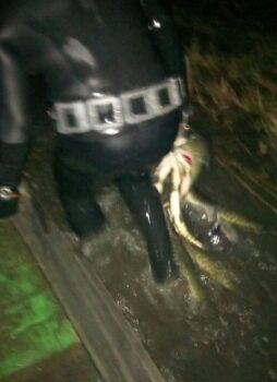 На Рівненщині затримали чоловіків, які займалися підводним полюванням