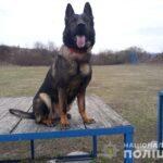 Зниклу жительку Рівненщини знайшла службова собака