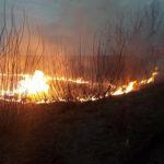 Острожецькі рятувальники ліквідували загоряння сухої трави