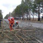 На Сарненщині негода повалила дерева