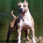 У Рівному власник собаки, яка напала на людину сплатить понад 26 тис грн відшкодування