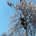 Кота, який сидів на дереві четверту добру зняли рятувальники