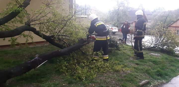 У Рівному через порив вітру дерево впало на автогараж та електроопору