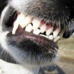 У Рівному бійцівська собака напала на дитину