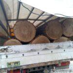Поліцейські встановлюють законність перевезення деревини на Зарічненщині