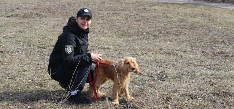 Навики не підвели: службовий пес знайшов метамфетамін у жителя Рівненщини