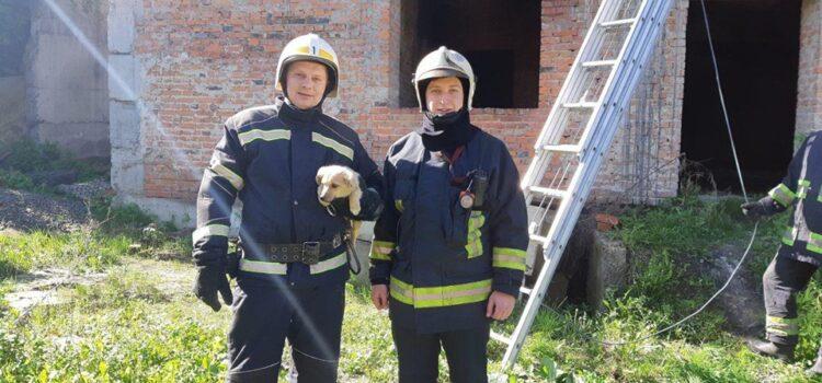 Рівненські рятувальники дістали цуценя, що впало між бетонними плитами недобудови
