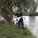 На Рівненщині рятувальники врятували лебедя від смерті