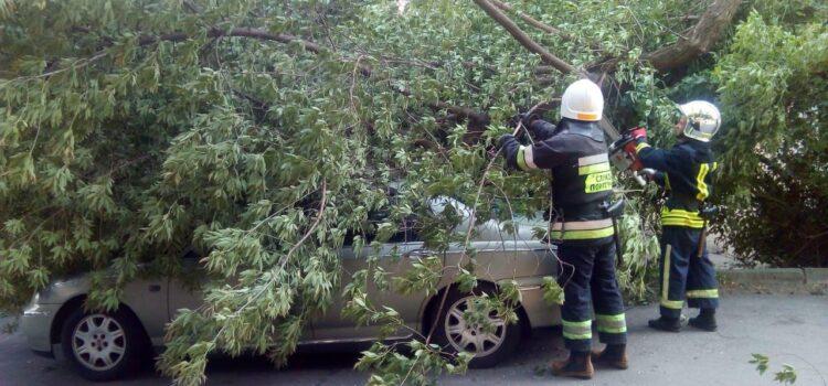 У Рівному на автівку впало дерево