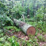 На Рівненщині лісівники затримали двох лісокрадів