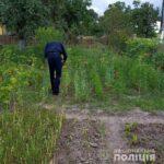 Майже 9000 рослин маку та конопель вилучили поліцейські Рівненщини із початку операції