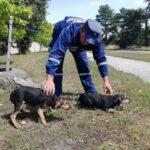 На Рівненщині рятувальники врятували цуценят з каналізаційного колодязя