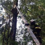 У Рівному рятувальники зняли з дерева кота, який просидів там дві доби