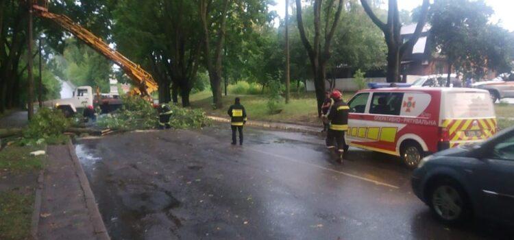 У Рівному через сильний порив вітру впало дерево