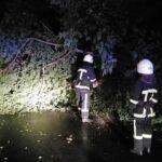 У Рівному на дорогу впало дерево