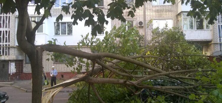 У Рівному на дві автівки впало дерево (ФОТО)
