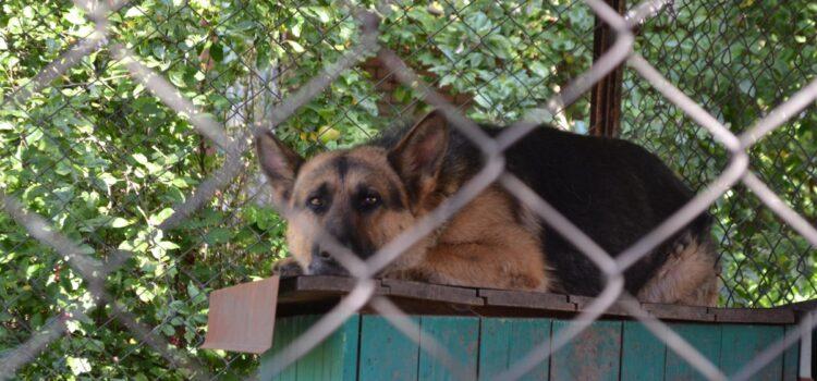 Спецоперація з порятунку: поліцейські та волонтери визволяли покинуту вівчарку (ВІДЕО)