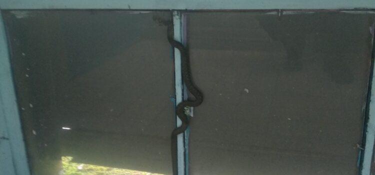 У Сарнах у під'їзд житлового будинку залізла змія