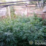 На Рівненщині поліцейські вилучили нарковмісні таблетки, канабіс та посів конопель