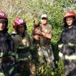 Собаку, яка впала у колодязь, врятували бійці ДСНС