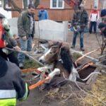 Коня, який провалився у яму, діставали рятувальники