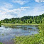 Рівненщина стане частиною українсько-білоруського транскордонного біосферного резервату «Прип'ятське Полісся»